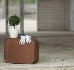 Old fashioned suitcase, white gloves and myrtle tree