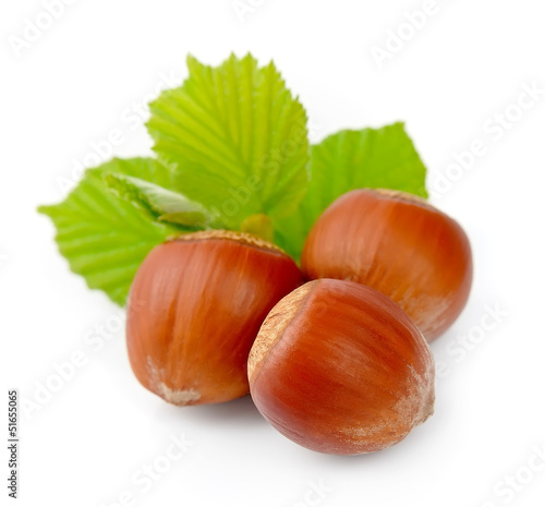 filbert nuts with green leaf