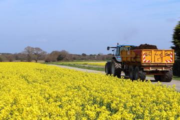 Un tracteur dans le champ de la moutarde