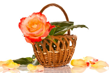 beautiful roses in a basket