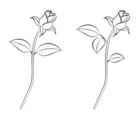 Rose lineart