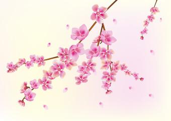 sakura . postcard . menu.