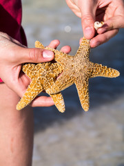 Beachcomer with starfish and shells