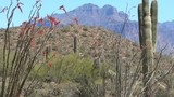 Superstition Mountain View