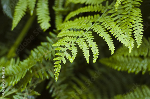 Morning dew and fern