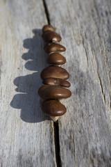 setas en tronco seco
