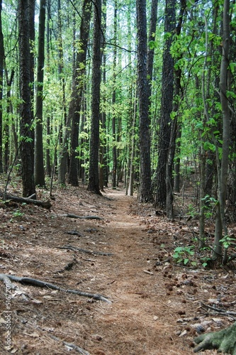 Forest hiking trail through trees with nobody