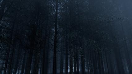 Foggy pine woods at dusk