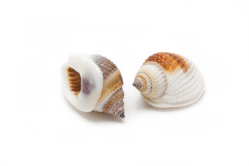 Sea shells isolated on white background.