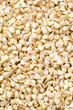 buckwheat sprouts green background
