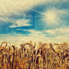 paper harvest