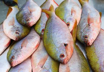 fresh fish seafood in market