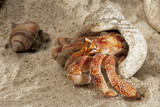 Hermit crab on white sand tropical paradise beach