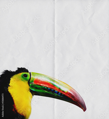 toucan paper background