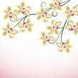 blüte, orchidee, orchideen, deko, hintergrund, muttertag, liebe