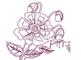 Vector illustration  with Poppy sketch white and claret