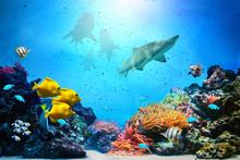 Underwater scen. Korallrev, fisk grupper, hajar