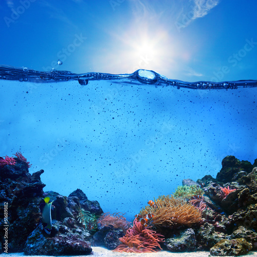 In de dag Onder water Underwater scene. Coral reef, clean water, blue sunny sky