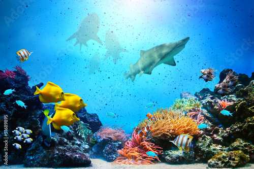 Leinwanddruck Bild Underwater scene. Coral reef, fish groups, sharks