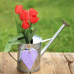rote Tulpen mit Herz