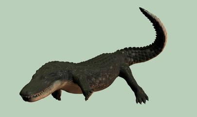 alligator 8000