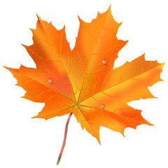 Herbst Ahornblatt, herbstlich