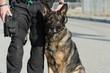 Police Dog - 51698282