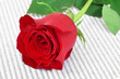 Постер, плакат: red rose and book for Saint Georges Day in Catalonia Spain