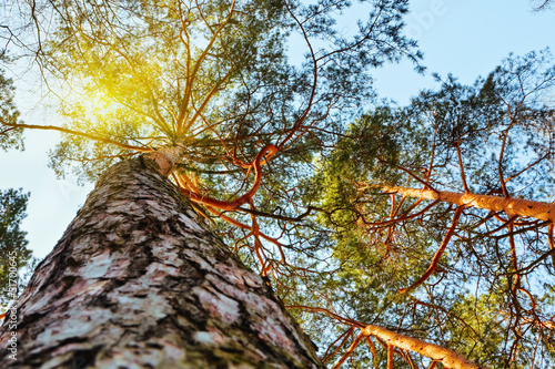sun's rays make their way through the branches