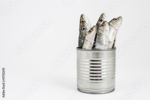 fresh fishes, sardine, in tin can as a preserved food