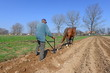Fallowing of a spring field by a manual plow