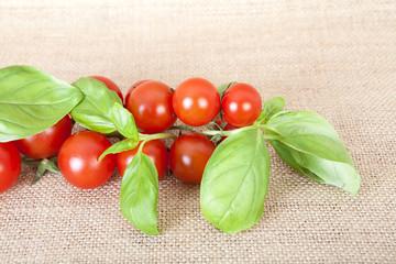 Pomodorini e basilico