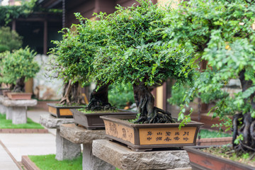 collection of bonsai trees