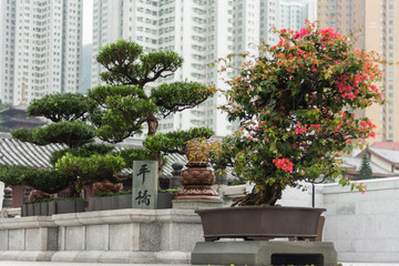 bonsai trees and tower blocks in Hong Kong