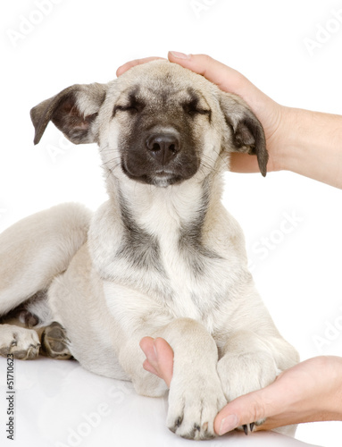 Hand caressing dog's head. isolated on white