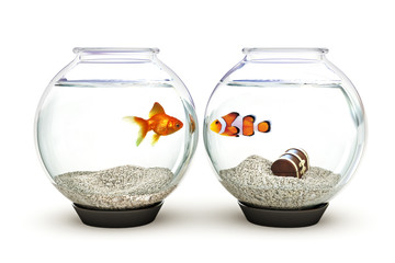 Opposites Attract, goldfish and clown fish showing curiosity