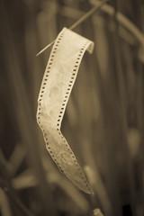 Negativo fotografico antiguo, viejo, vintage, como basura.