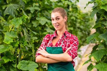 Female commercial gardener in green house