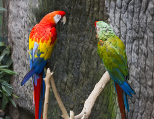 Colourful parrot bird