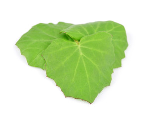 Coltsfoot leaf