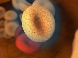 Glóbulos