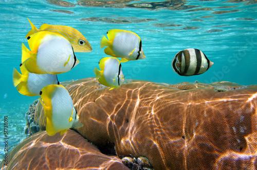 Papiers peints Recifs coralliens Coral and tropical fish