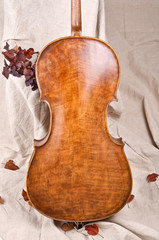 violoncello back and autumn leaves
