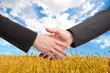 People shaking hands in a wheat field