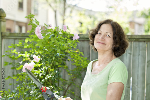 Senior woman pruning rose bush