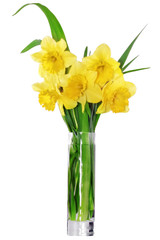 Beautiful spring flowers in vase: yellow   narcissus (Daffodil).