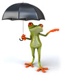 Fun frog and umbrella
