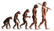 Leinwandbild Motiv Evolution
