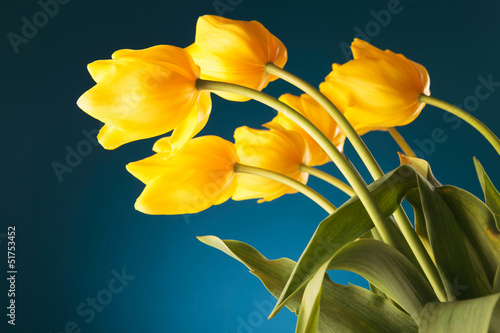 back of a gorgeous bouquet of yellow tulips