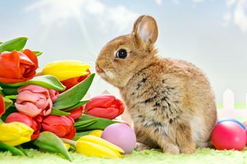 Baby Kaninchen mit Blumen und Ostereiern